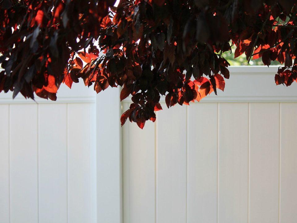 Clean vinyl fences